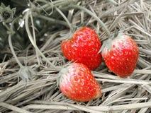 свежая клубника Стоковое фото RF