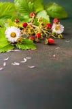 свежая клубника Стоковые Изображения