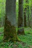 Свежая лиственная стойка в лете Стоковая Фотография RF