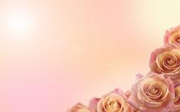 Свежая мягкая предпосылка цвета с розовыми цветками венчание сети шаблона страницы приветствию карточки предпосылки всеобщее Стоковые Фото