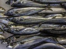 Свежая норвежская скумбрия на льде в азиатском рынке стоковые фотографии rf
