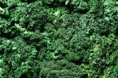 Свежая органическая зеленая предпосылка листовой капусты, селективный фокус, взгляд сверху, космос экземпляра зеленая текстура Стоковая Фотография RF