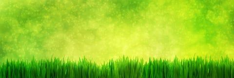 Свежая панорама зеленой травы на естественной предпосылке природы нерезкости Стоковое Изображение