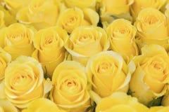 Свежая предпосылка желтых роз Огромный букет цветков Самый лучший подарок для женщин стоковые изображения