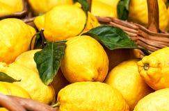 Свежая предпосылка лимонов Стоковая Фотография RF