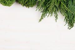 Свежая предпосылка молодой зеленой хвои разветвляет как граница с космосом экземпляра на белой предпосылке деревянной доски Стоковое Изображение