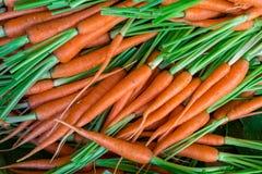 Свежая природа предпосылки морковей младенца Стоковое фото RF