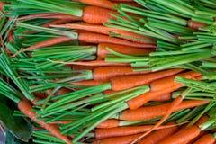 Свежая природа предпосылки морковей младенца Стоковая Фотография