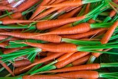 Свежая природа предпосылки морковей младенца Стоковые Изображения