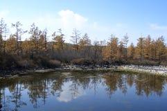 Свежая природа утра Стоковые Фото