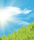 свежая пшеница травы Стоковые Фотографии RF