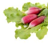 Свежая редиска на зеленых листьях салата салата Стоковая Фотография