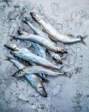 Свежая рыба Shishamo задвижки полно eggs плоское положение на затрапезном ба металла Стоковые Фото