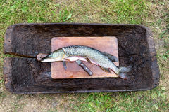 Свежая сырая рыба слезли щука, который и подготавливает для отрезать и варить на деревянной разделочной доске рядом с ножом close Стоковое Изображение