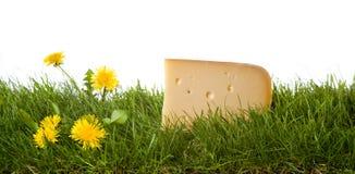 свежая сыра голландская Стоковые Фотографии RF