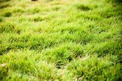 Свежая текстура зеленой травы искусственная и Стоковое Изображение RF