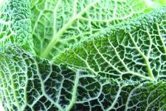 Свежая текстура предпосылки еды крупного плана капусты савойя Стоковая Фотография