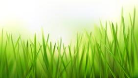 Свежая трава - предпосылка природы также вектор иллюстрации притяжки corel Стоковое Изображение RF