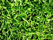 Свежая трава Стоковые Изображения