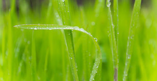 Свежая трава Стоковое Фото