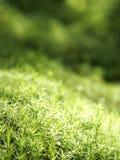свежая трава Стоковое Изображение