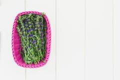 Свежая трава hyssop стоковая фотография