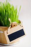 Свежая трава wheet Стоковое Изображение RF