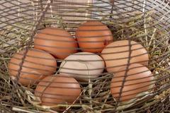 Свежая ферма eggs в корзине ячеистой сети на соломе стоковая фотография rf