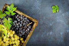 Свежая хлебоуборка виноградин стоковое фото
