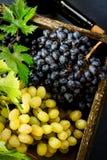 Свежая хлебоуборка виноградин стоковые изображения