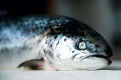 Свежая salmon предпосылка темной черноты рыб конкретная подготовила для хранить Скопируйте космос, взгляд сверху стоковое фото rf