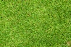 Свежее взгляд сверху зеленой травы Стоковые Изображения RF