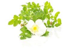 Свежее зеленое растение изолированное на белизне Стоковое Изображение RF