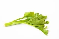 свежее зеленое vegetabl стоковые изображения