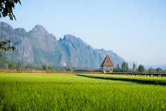 Свежее зеленое поле риса против горы Стоковые Изображения RF