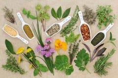 Свежее и высушенное собрание специи и травы стоковое фото