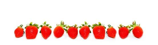 10 свежее и естественные красные клубники изолированные на безшовной широкой рамке панорамы форматируют белую предпосылку Стоковые Фото