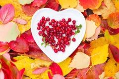 Свежее красное падение плиты сердца клюкв леса выходит деревянная предпосылка Стоковые Фото