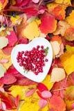 Свежее красное падение плиты сердца клюкв леса выходит деревянная предпосылка Стоковое Изображение RF