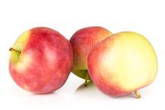 Свежее красное яблоко james горюет изолированный на белизне Стоковое фото RF