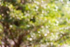 Свежее мягкое дерево и солнечный свет куста bokeh зеленого цвета Стоковая Фотография RF