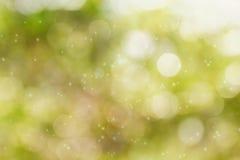 Свежее мягкое дерево и солнечный свет куста bokeh зеленого цвета Стоковые Фото