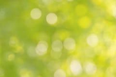 Свежее мягкое дерево и солнечный свет куста bokeh зеленого цвета Стоковое фото RF