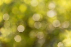 Свежее мягкое дерево и солнечный свет куста bokeh зеленого цвета Стоковые Фотографии RF