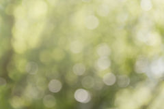 Свежее мягкое дерево и солнечный свет куста bokeh зеленого цвета Стоковая Фотография