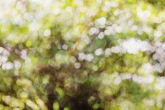 Свежее мягкое дерево и солнечный свет куста bokeh зеленого цвета Стоковое Изображение