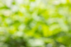 Свежее мягкое дерево куста bokeh зеленого цвета для предпосылки природы Стоковая Фотография RF