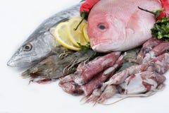 свежее разнообразие продуктов моря Стоковые Фотографии RF