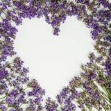 Свежее сердце лаванды изолированное на белой предпосылке Стоковое Фото