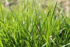 Свежее утро травы, предпосылка травы Стоковое Изображение RF